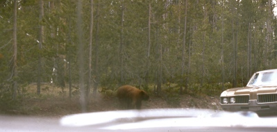 1965 Yellowstone 8 Bear and Mercury