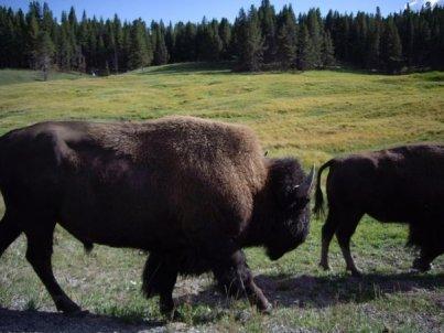 2007 Yellowstone 2