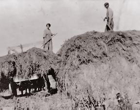 Heinz, May & Frank haying